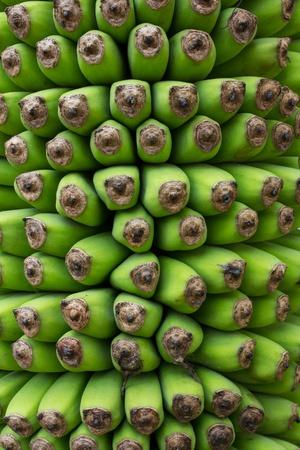 Banana,Musa chiliocarpa Back,100 hand Banana Plant for the show to be beautiful photo