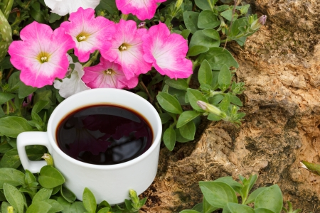 cup of coffee,pink petunia flowers photo