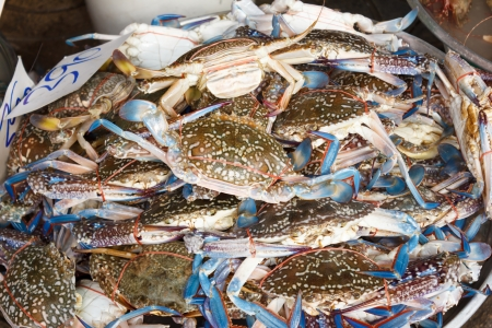 raw crab at seafood market  photo