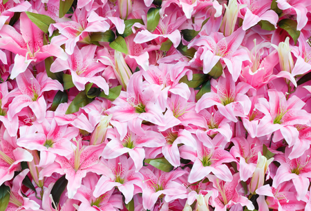 Artificial pink rain lily flowers for background photo