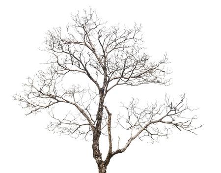arboles secos: �rbol muerto aislado en fondo blanco