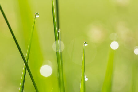 apical: Two water drops on grass background