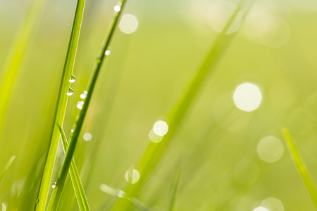 water drops on grass with bokeh background photo