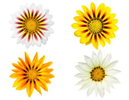 Set of gazania flowers isolated on white background photo