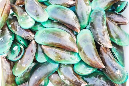 top veiw: Green mussel