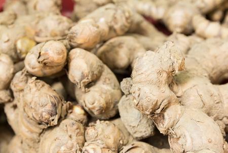 thai herb: Phlai or Cassumunar ginger - Thai herb