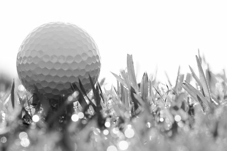 white space: black and white photo of golf ball on grass with bokeh Stock Photo