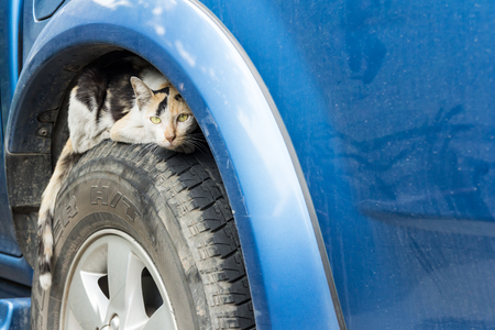 Stray cat peeping on wheel car