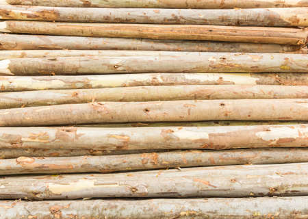 pile of logs: pile of wooden timber logs Stock Photo