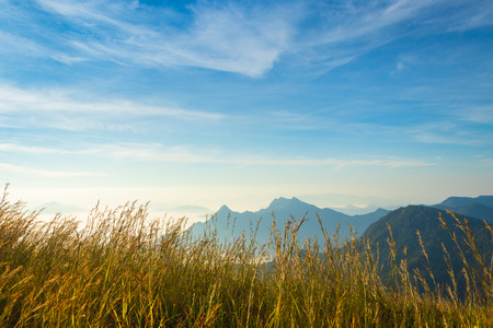 golden meadow grass on mountain and blue sky background Imagens