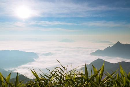 the sun and blue sky over fog and mountains in the morning with green leaves foreground