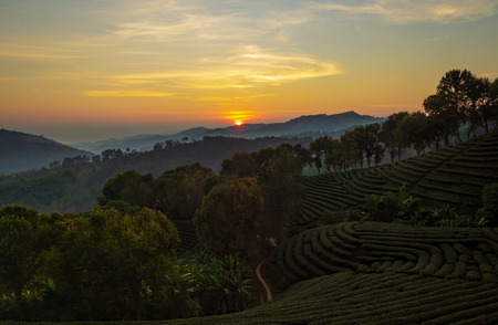 Sunrise over mountains and tea plantation foreground at Chiang Rai,Northern Thailand.