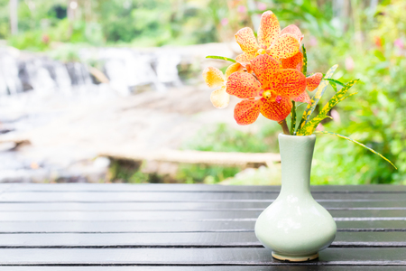 orange orchid in vase on black wooden table and nature view background