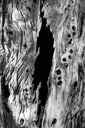 black and white photo of bark tree border on black background Imagens