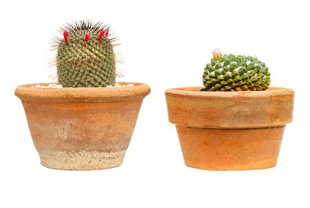 set of side view cactus in clay pot isolated on a white background Stok Fotoğraf