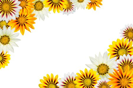 frame of colorful gazania flowers isolated on a white background