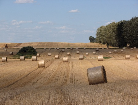 Golden sheaves of rolled hay abandoned in the field after harvest time Stock Photo - 10201376