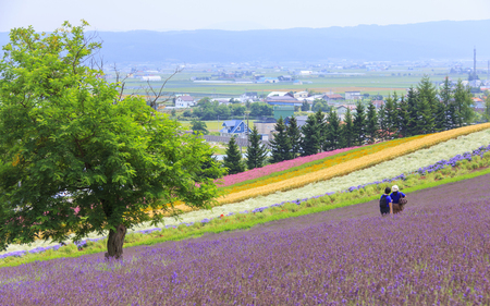 Lavender and colorful flower fields with tourists in the background, at Tomita farm, famous tourist attraction of Furano, Hokkaido.
