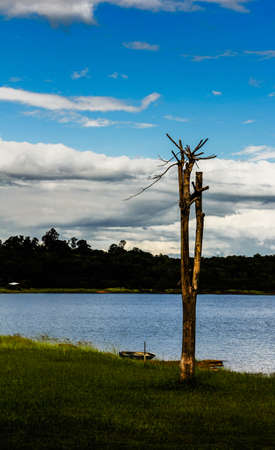 Lonely dead tree by the river