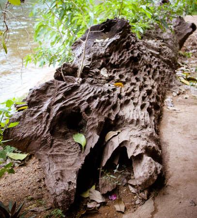 log at riverside