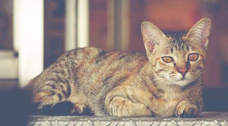 pleaded: wooing cat