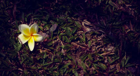 blooming on the ground