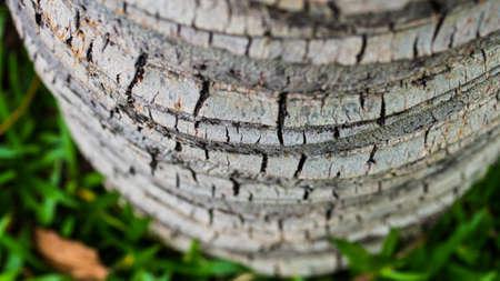 rough: rough bark