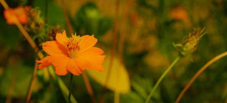orange flower Banco de Imagens