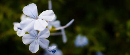 a pale purple flower