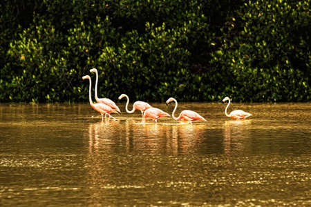 The flock of pink flamingo in the green water Stock Photo - 13291038