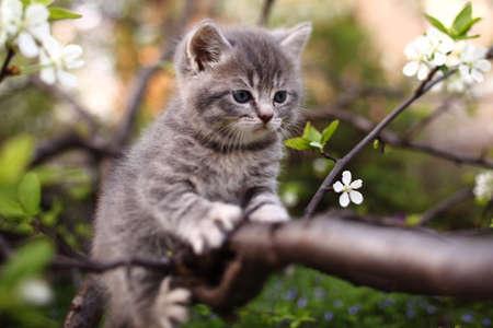 aanbiddelijke jonge kat in de groene boom Stockfoto