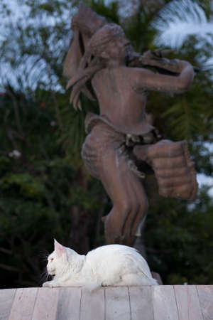 maine coon: white  maine coon cat female seats on statue background Stock Photo