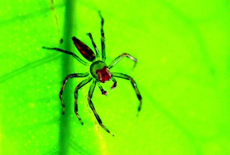 arthropods: Animals, insects, spiders, biological Stock Photo