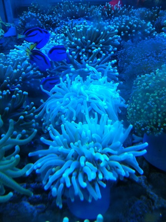 Tropical marine reef Stock Photo - 23857719