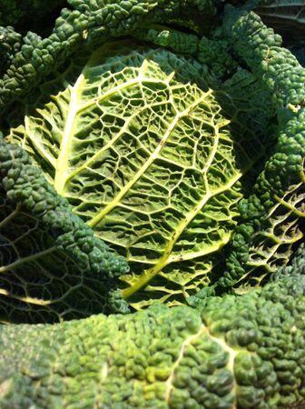 savoy cabbage: Close up of Savoy cabbage  Stock Photo