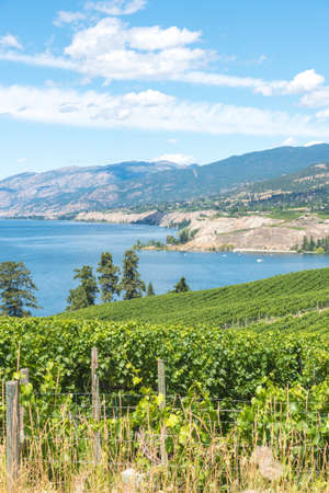 Landscape view of vineyards, lake, mountains and blue sky in summer