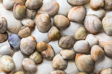 Collection of various colorful wet clam shells from pacific ocean 스톡 콘텐츠
