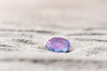 Sunlight shines through beautiful pink and purple shell on sandy beach
