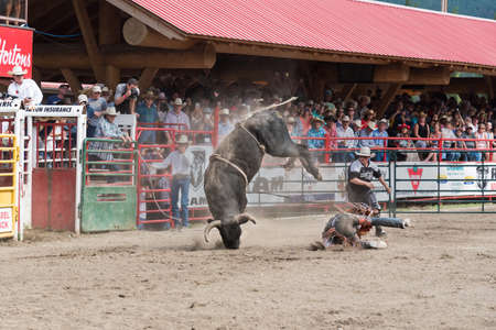 Williams Lake, British Columbia/Canada - July 2, 2016: cowboy is thrown to the ground and narrowly misses being kicked by a bucking bull at the 90th Williams Lake Stampede.