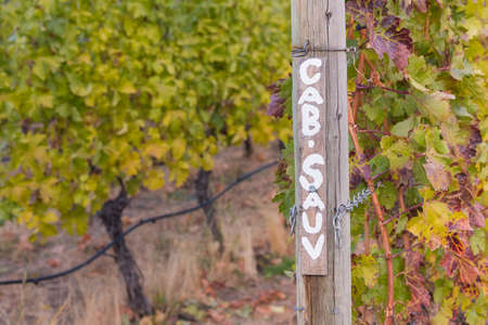 Sign-post in vineyard painted with Cab-Sauv marking cabernet sauvignon grapevines in autumn