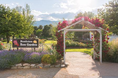 Penticton, British ColumbiaCanada - June 21, 2019: the Penticton Rose Garden is a very popular public city garden located near Okanagan Lake. 新聞圖片