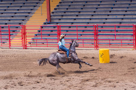 Williams Lake, British ColumbiaCanada - June 19, 2016: horse and rider race to barrel in barrel racing event called the Stampede Warm-Up to prepare for the Williams Lake Stampede, one of the largest stampedes in North America 新聞圖片