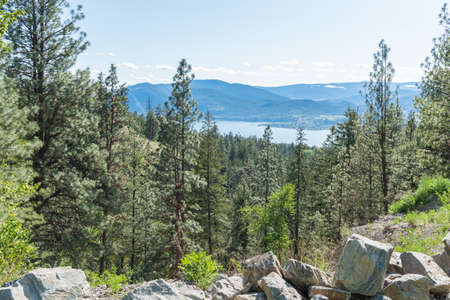 High altitude view from the Kettle Valley Rail Trail of pine tree forest with Okanagan Lake and mountains in distance