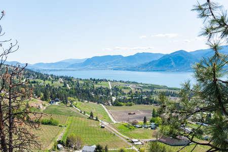 Panoramic view of springtime vineyards in Naramata, Okanagan Lake, mountains, and blue sky 版權商用圖片