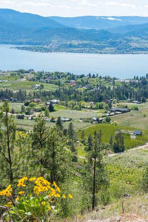 View of Naramata, Okanagan Valley vineyards, and Okanagan Lake in springtime