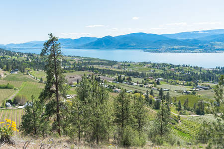 Panoramic view of vineyards and orchards in Naramata, Okanagan Lake, and the Okanagan Valley 版權商用圖片