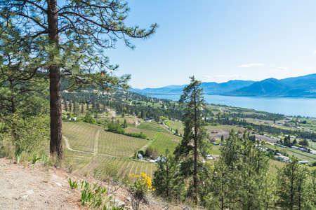 Beautiful panoramic view of the Okanagan Valley and Okanagan Lake with blue sky 版權商用圖片