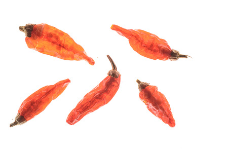 backlighting: dried chillies,backlighting Stock Photo