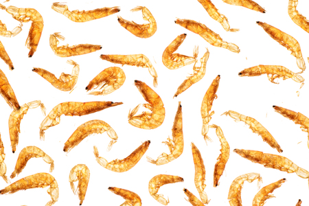 dried small shrimps,backlighting