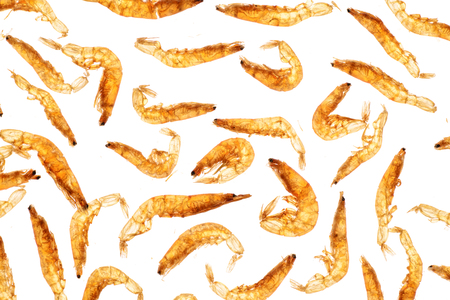 dried small shrimps,backlighting photo